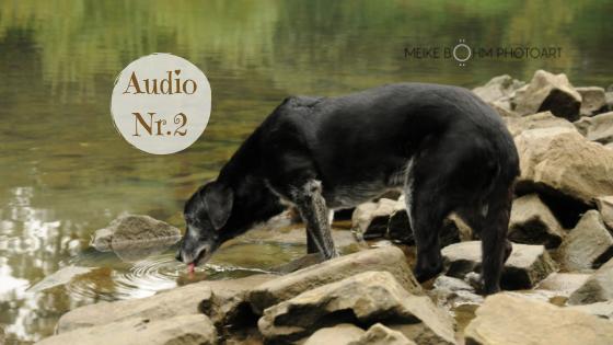 Lebensweisheiten eines Klosterhundes Teil 2  – Mein Leben im Kloster