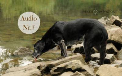 LebensWeisheiten eines Klosterhundes – Teil 7 Meditieren ist einfach