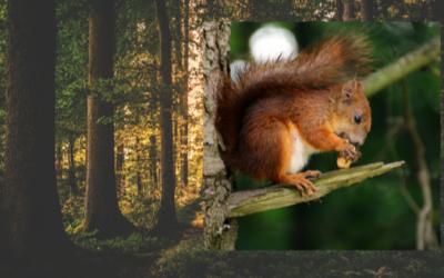 Einblick in die Welt der Eichhörnchen
