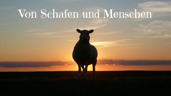 Von Schafen und Menschen