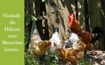 Weshalb wir Hühner zu den Menschen kamen