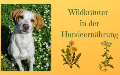 Wildkräuter in der Hundeernährung