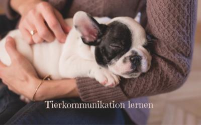 Tierkommunikation lernen und im Alltag nutzen