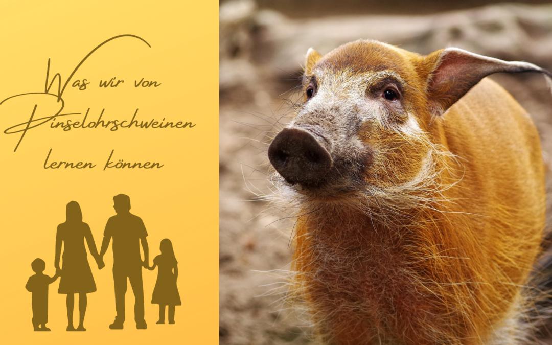 Tierkommunikation Pinselohrschweine