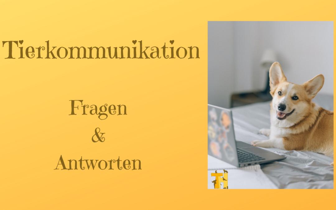 Tierkommunikation – Fragen und Antworten